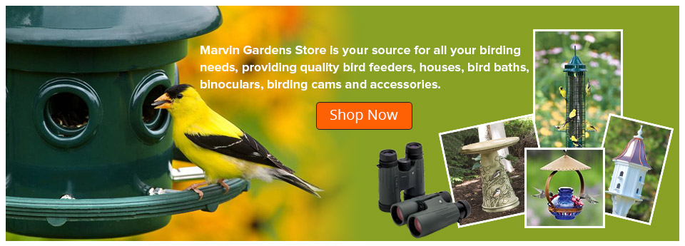 Shop Now - Birds