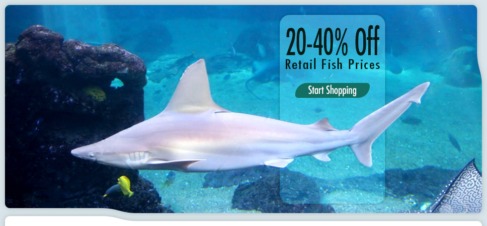 SharkandReef | eBay Stores